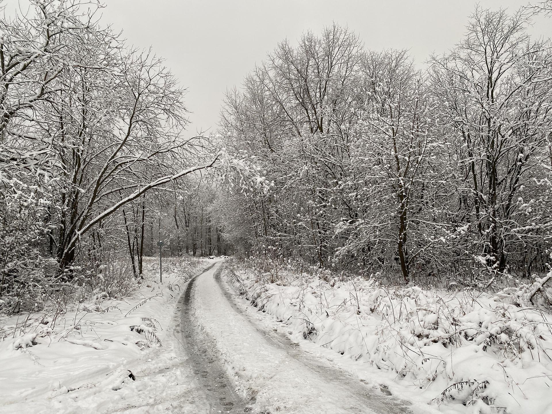 Pojisteni olomouc - Ladovska zima